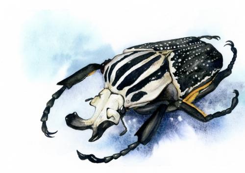 alt beetle lifestyle